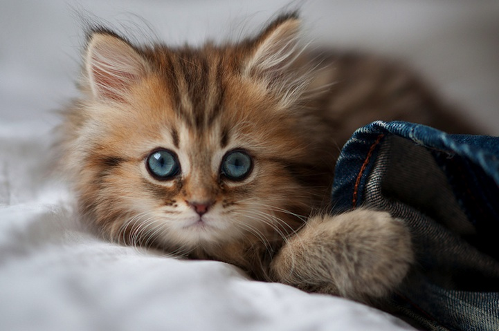 cutest_kitten